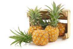 Mini fruto fresco do abacaxi em uma caixa de madeira Fotos de Stock Royalty Free