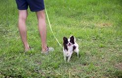 Mini gambe dell'essere umano e del cane Fotografie Stock Libere da Diritti