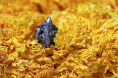 Mini Ganesha made from brass among of yellow marigold flower. Mini Ganesha made from brass among of yellow marigold flower, the son of Uma Devi god in Hinduism stock image