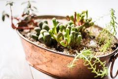 Mini garden in a copper pot stock images