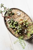 Mini garden in a copper pot stock photo