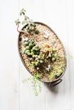 Mini garden in a copper pot stock photography