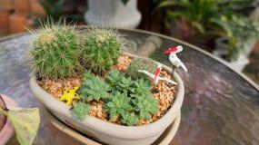 Mini garden Stock Photography