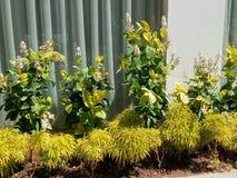 Mini Garden im Arbeitsplatz stockbild