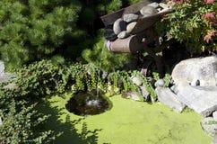 Mini garden pond Stock Photo