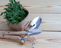 Mini garden tools with green plants on wooden background Stock Photo