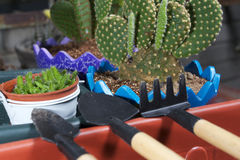 Mini garden tools Royalty Free Stock Photo