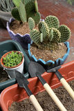 Mini garden tools Royalty Free Stock Image