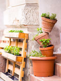 Mini gardening - several pots with plants stacked. Outdors Royalty Free Stock Photography