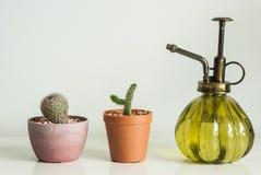 Mini giardino Fotografia Stock Libera da Diritti