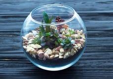 Mini giardino in vaso di vetro sui precedenti di legno fotografia stock