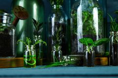 Mini glass vases and bottle with green  leaves, plants. Wet. Gardening. Spring concept. Saving environment concept Stock Photos