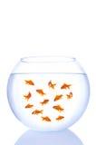 Mini goldfishes Royalty Free Stock Images