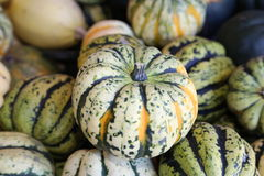 Mini Green and orange Pumpkins. A mini pumpkin on top of more pumpkins advertising that the season is changing, and thanksgiving,halloween, and harvest time is stock images
