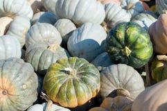 Mini Green Pumpkins Royalty Free Stock Photo