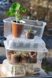 Mini greenhouse Royalty Free Stock Photo