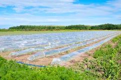 Mini greenhouses Stock Photography