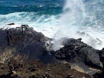 Mini- hawaiansk blåshål Arkivfoto