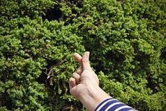Mini heart symbol on tree background. Right woman hand Stock Photography