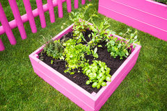 Mini herb garden Stock Images