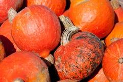 Mini Hokkaido pumpkins Stock Photography