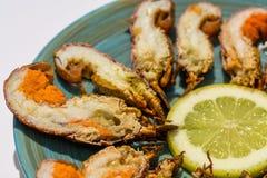 Mini homards Image libre de droits