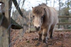 Mini Horse door Omheining stock afbeeldingen