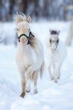 Mini horses Stock Photos