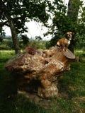 Mini- hund på en överkant av en stam royaltyfri bild