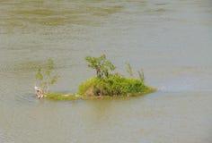 Mini ilha no rio Fotografia de Stock