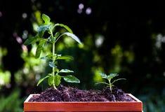 Mini jardín de la hierba fotografía de archivo libre de regalías