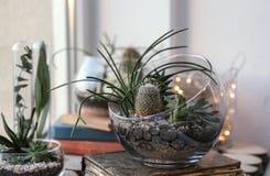 Mini jardín suculento en el terrario de cristal fotografía de archivo libre de regalías
