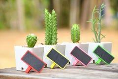 Mini- kaktus, fyra - dagbegrepp, söndag, måndag, tisdag, onsdag Royaltyfria Bilder