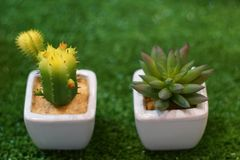 Mini kaktus w garnku drzewo jest bardzo silny Fotografia Royalty Free