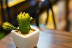 Mini kaktus w garnku drzewo jest bardzo silny Obrazy Stock