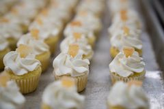 Mini Lemon Cupcakes royalty-vrije stock fotografie