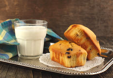 Mini loaves with chocolate chips Stock Image