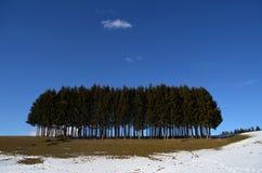 Mini madera de los árboles de pino con la nieve - 2015 Foto de archivo