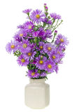 Mini Magenta Chrysanthemums Stock Images