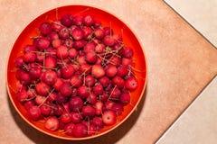 Mini manzanas de cangrejo rojas imagen de archivo