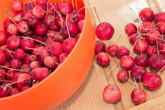 Mini manzanas rojas y x28; apple& x29 del cangrejo; Fotos de archivo libres de regalías