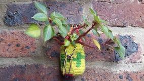 Mini mochila del wayuu fotos de archivo libres de regalías