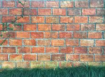 Mini mondo grass and creeping fig growing on orange brick with cement background. Vintage wall wallpaper royalty free stock photo