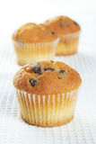 Mini muffins stock photography