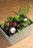Mini ogródu Uprawiać ziemię Zdjęcie Royalty Free