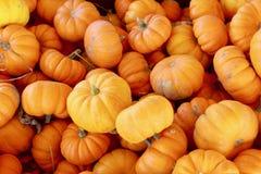 Mini orange pumpkin fall macro background texture. Thanksgiving or Halloween Stock Photo