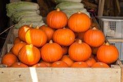Mini orange pumpkins in bulk at the farmers market in the fall royalty free stock photos