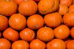 Mini- orange pumpor i massa på bönderna marknadsför i nedgången arkivfoto