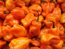 Mini Orange Sweet Peppers for Sale. Stock Images