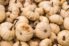 Mini Ornamental Pumpkins Royalty Free Stock Images